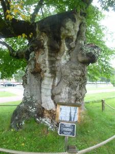 Pippis Limonadenbaum.