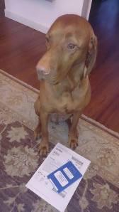 Mina war schon seit Tagen aufgeregt und hatte ihre Papiere immer bei sich.