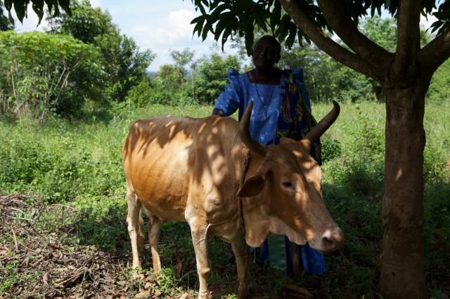Bei Bauern in Entwicklungsländern leben die Kälber mit ihren Müttern meist sehr lang zusammen.