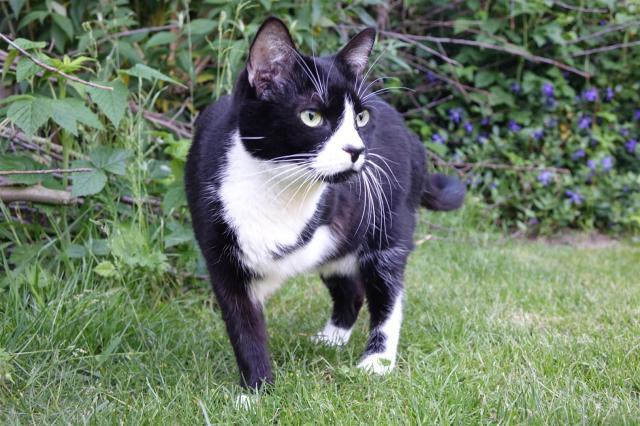 dreibeinige Katze (c) VIER PFOTEN, Magdalena Scherk-Trettin (Large)