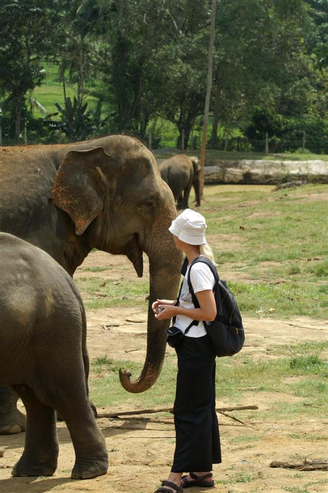 Bei meinem Besuch des Pinnewala-Elefanten-Waisenhauses in Sri Lanka.