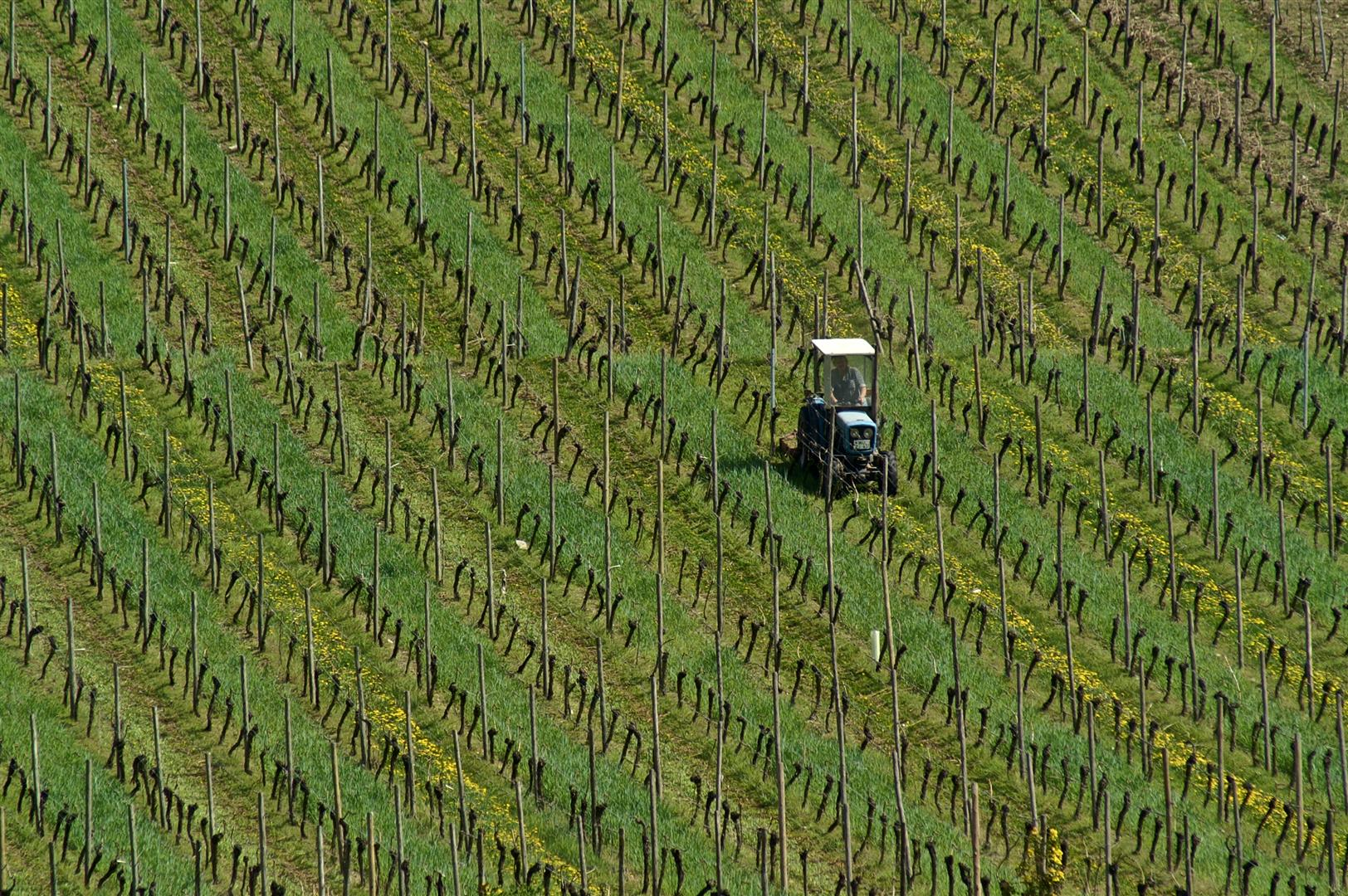 Meine Heimat: Mainfranken – Weinfranken, Teil 2