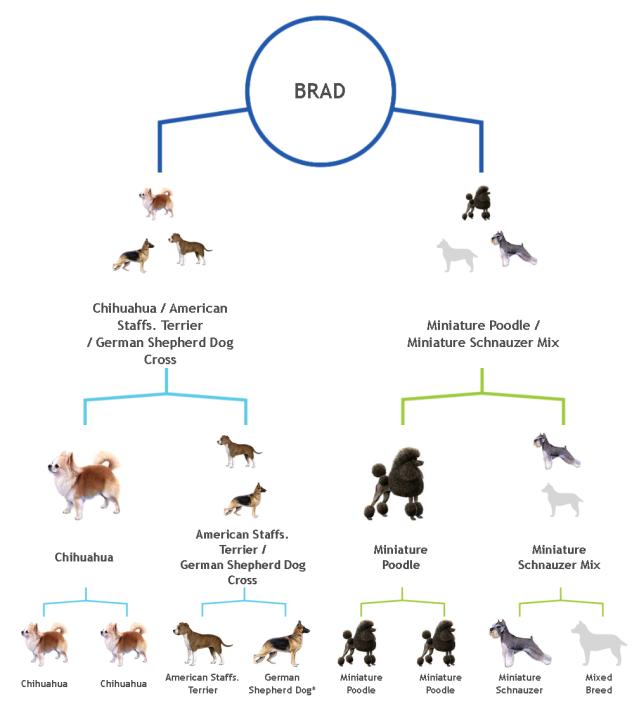 Stammbaum-Brad