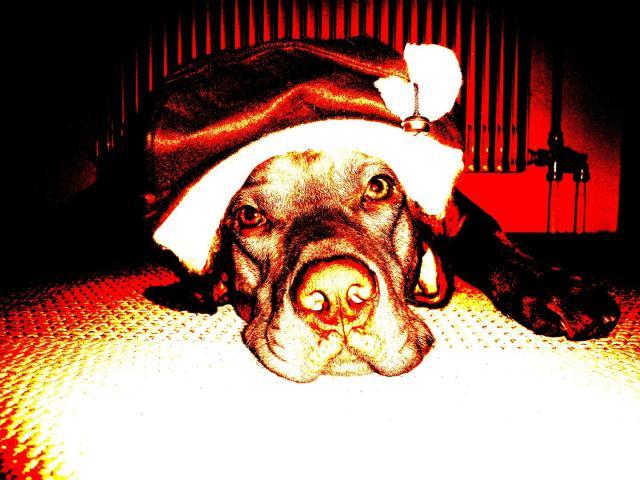 Weihnachts-Gaston (Large)