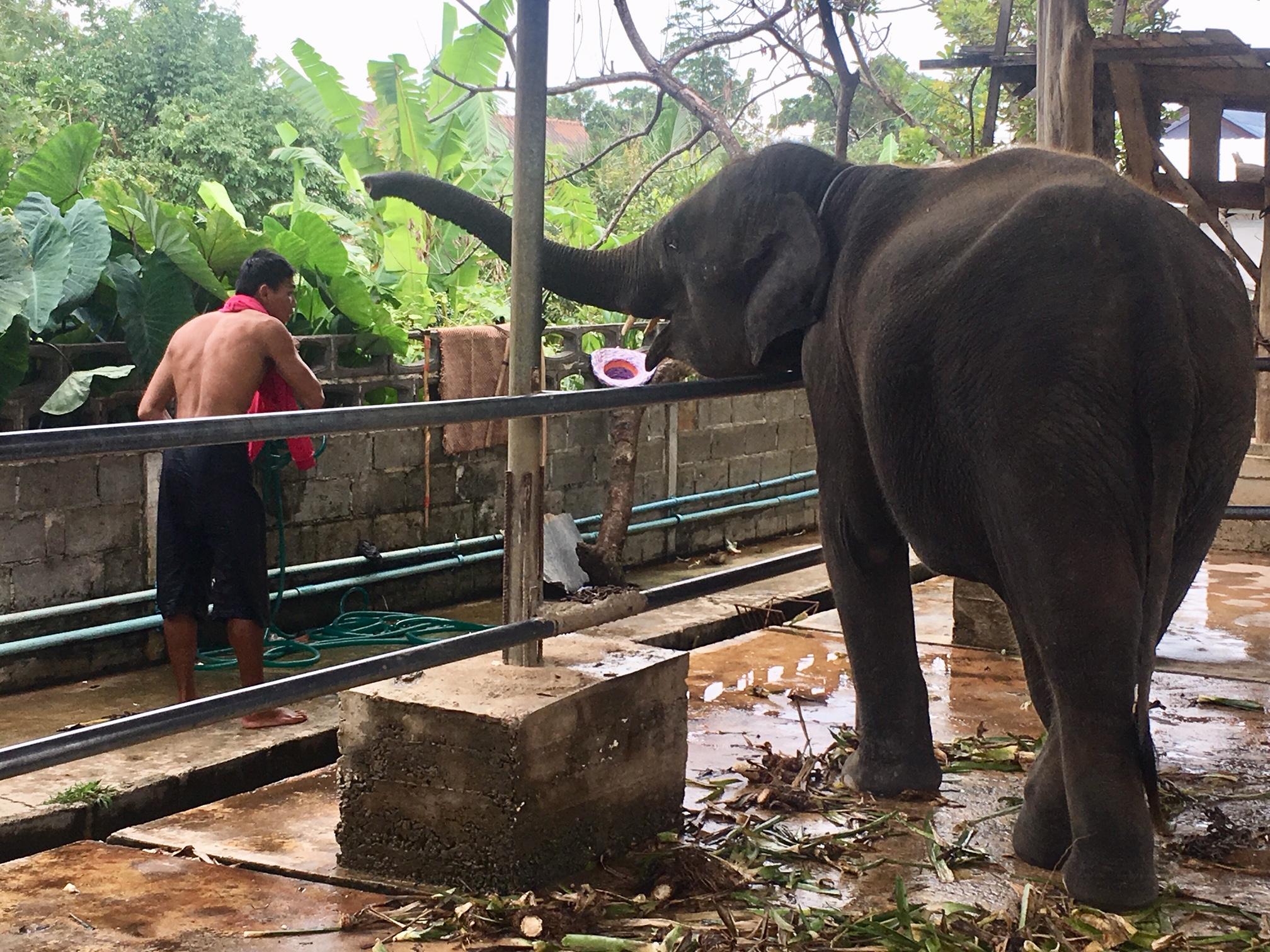 Die Angst der Elefanten